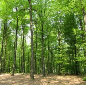Wald 5434-300x298 in